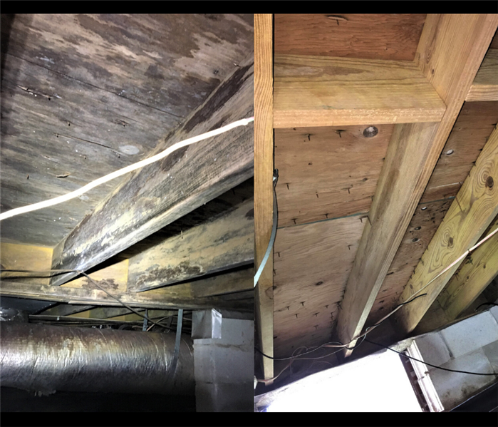 Mold spores on floor joist; Mold spores removed from joist